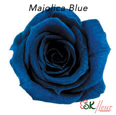 Baby Rose / Majolica Blue