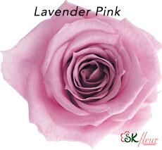 Baby Rose / Lavender Pink