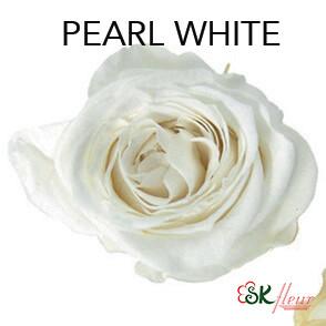 Piccola Blossom Rose / Pearl White