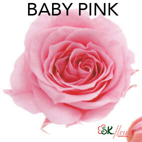 Piccola Blossom Rose / Baby Pink