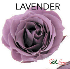Piccola Blossom Rose / Lavender