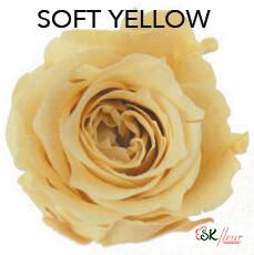Piccola Blossom Rose / Soft Yellow