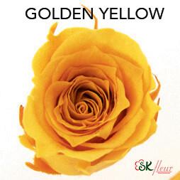 Piccola Blossom Rose / Golden Yellow