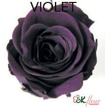 Piccola Blossom Rose / Violet