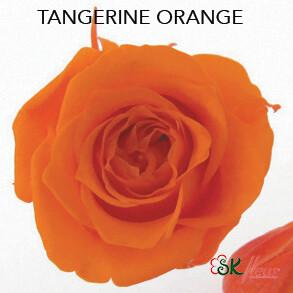 Piccola Blossom Rose / Tangerine Orange