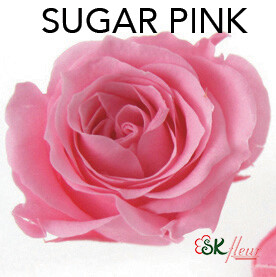 Piccola Blossom Rose / Sugar Pink