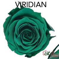 Piccola Blossom Rose / Viridian
