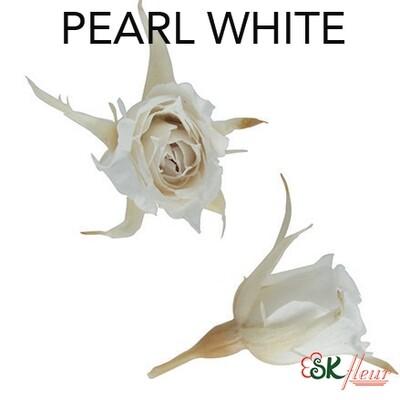 Micro Rose / Pearl White