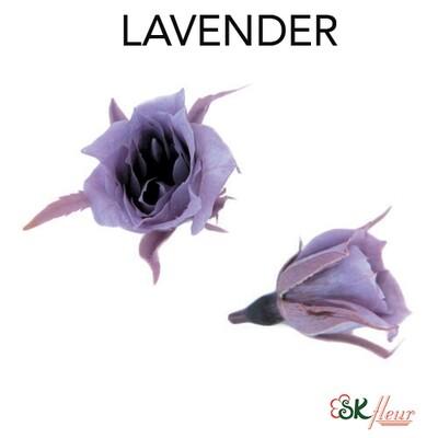 Micro Rose / Lavender