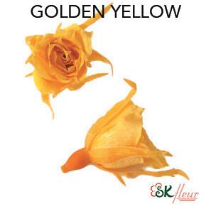 Micro Rose / Golden Yellow