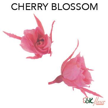 Micro Rose / Cherry Blossom