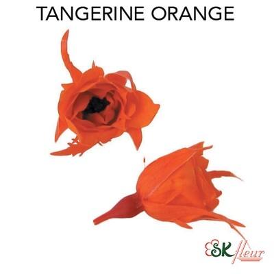 Micro Rose / Tangerine Orange