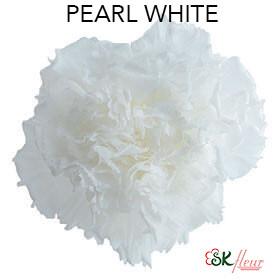 Mini Carnation / Pearl White