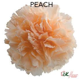 Mini Carnation / Peach