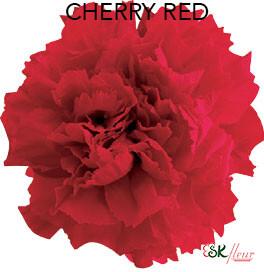 Mini Carnation / Cherry Red