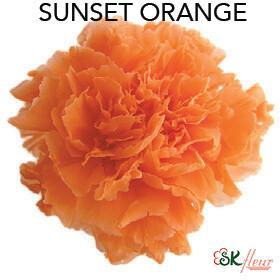 Mini Carnation / Sunset Orange