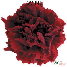 Mini Carnation / Wine
