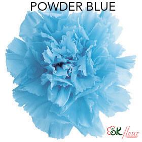 Mini Carnation / Powder Blue