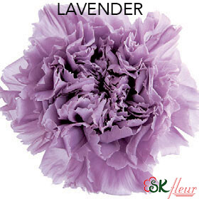 Mini Carnation / Lavender