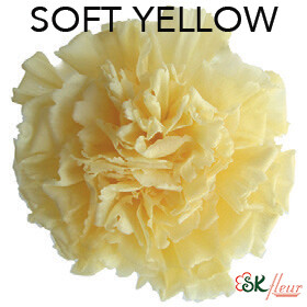 Mini Carnation / Soft Yellow