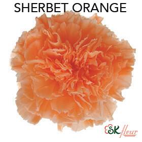 Mini Carnation / Sherbet Orange