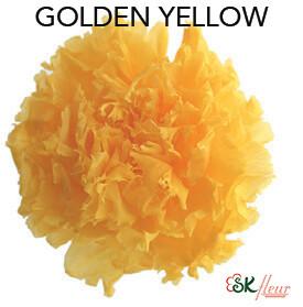 Mini Carnation / Golden Yellow