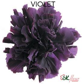 Mini Carnation / Violet
