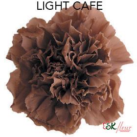 Mini Carnation / Light Cafe
