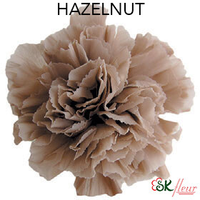 Mini Carnation / Hazelnut