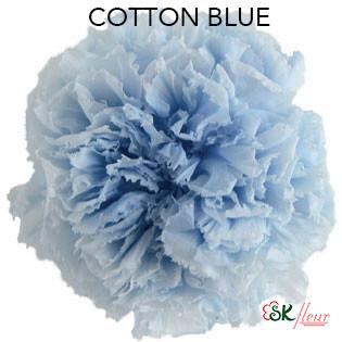 Mini Carnation / Cotton Blue