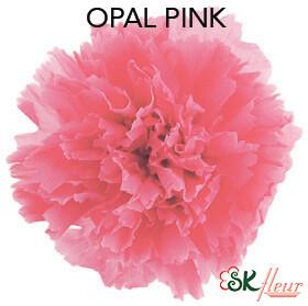 Mini Carnation / Pink Opal