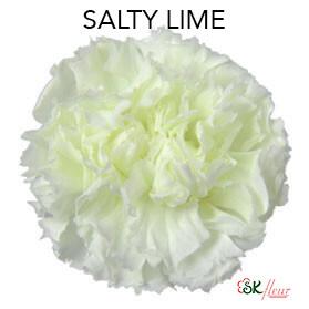 Mini Carnation / Salty Lime