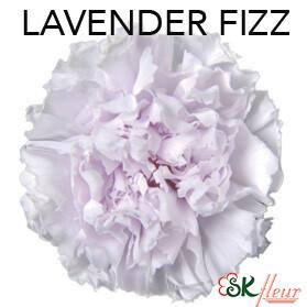 Mini Carnation / Lavender Fizz