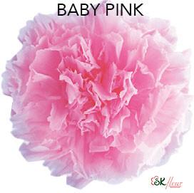 Mini Carnation / Baby Pink