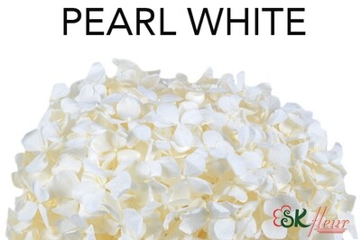 Andes Ajisai / Pearl White