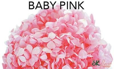 Andes Ajisai / Baby Pink