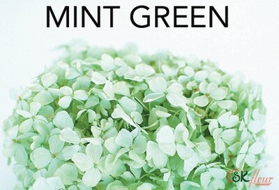Andes Ajisai / Mint Green