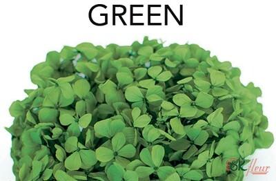 Andes Ajisai / Green