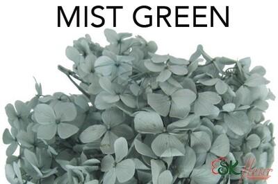 Andes Ajisai / Mist Green