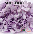 Andes Ajisai / Soft Lilac