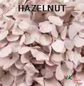 Andes Ajisai / Hazelnut