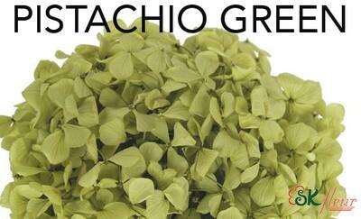 Andes Ajisai / Pistachio Green
