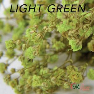 Gypsophila / Light Green