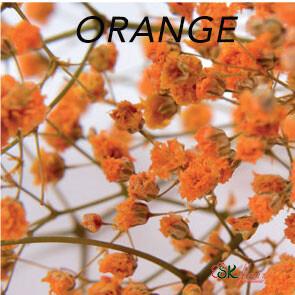 Gypsophila / Orange