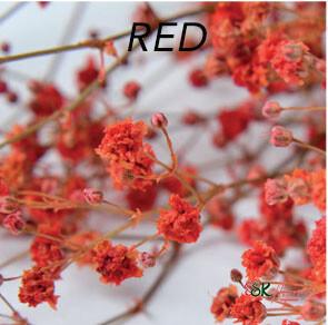Gypsophila / Red