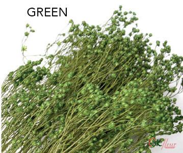 Brooms / Green