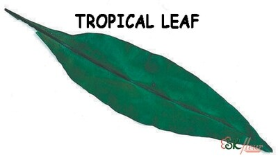 Tropical Leaf / Green
