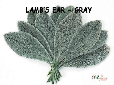 Lamb's Ear in Box / Gray