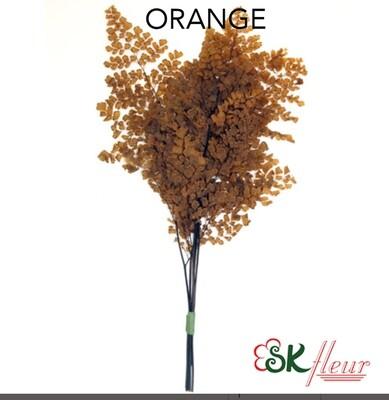Lutti Adiantum / Orange