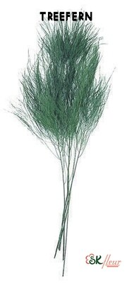 Treefern / Green